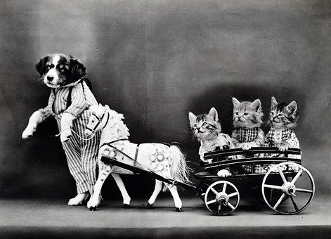 Dog, Puppy, Cat, Cats, Kittens, Kitten, Dressed