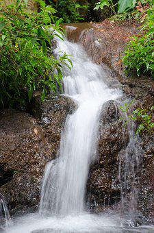 Funchal, Madeira, Portugal, Botanical Garden, Botanical