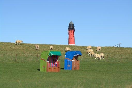 Dike, Green Beach, Beach, Lawn, Clubs, Sheep