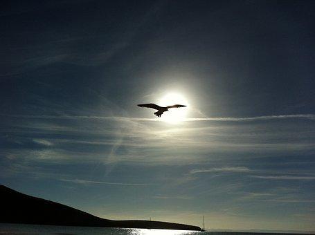 Los Cabos, Peace, Padilla, I, Mexico, Sloop, Jump, Sea