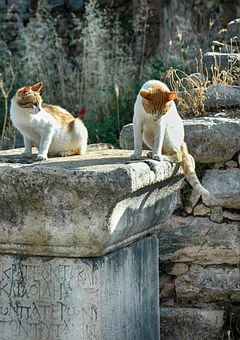 Ruins, Remains, Ephesus, Greek City, Asia Minor, Cat