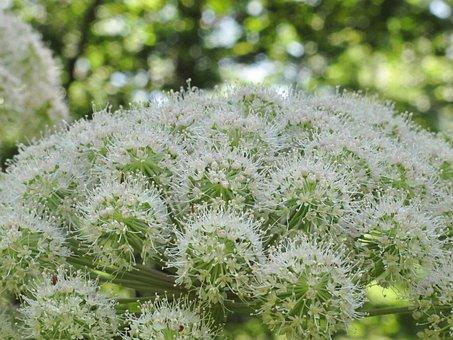 Freshness, Vaporous, Plant, Atmosphere, Garden, Flower