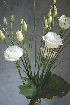 Lisianthus, Flower, Blossom, Bloom, White, White Flower