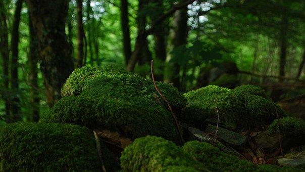 Forest, Trees, Foam, Vegetation, Undergrowth, Rocks