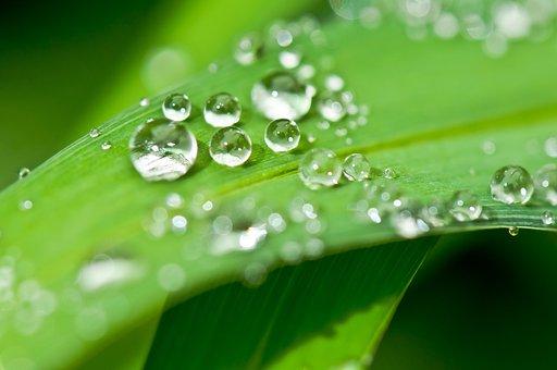Drip, Dew, Dewdrop, Water, Drop Of Water, Leaf, Halm