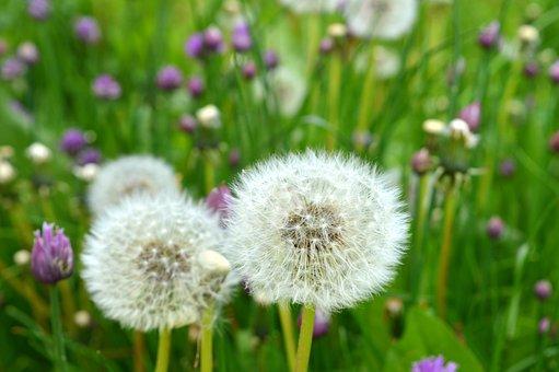 Pre, Flowers, Fleurs Des Champs, Spring, Prairie, Grass