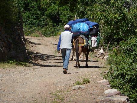 Mule, Muleteer, Road, Morocco, Outdoors, Baggage