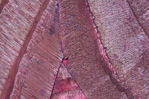 Wood, Bark, Structure, Fund, Background, Grain, Nature
