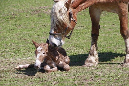 Life, Birth Foal, Horse, Born, Mare, Pasture, Rural