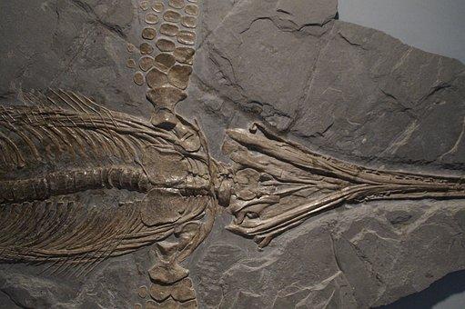 Ichthyosaurs, Ichthyosaur, Fossil, Skeleton, Fossilized