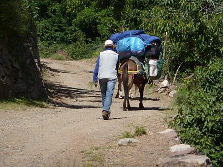 Mule, Muleteer, Road, Morocco, Outdoors, Baggage