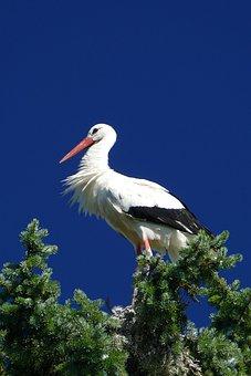 Stork, Bird Park, Walsrode, Park, Macro
