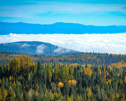 Northeast Washington, Fall, Fall Colors, Fog, Forest