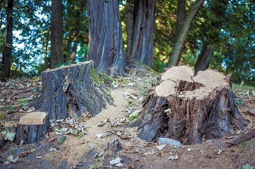 Tree Stump, Trees, Forest, Like, Nature, Landscape