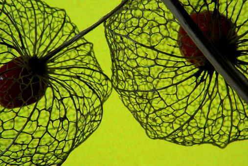 Love In A Cage, Macro, Fruit, Toxic, Fall, Lace