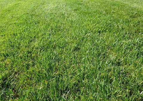 Grass, Green, Outdoors, Outside, Outdoor, Background