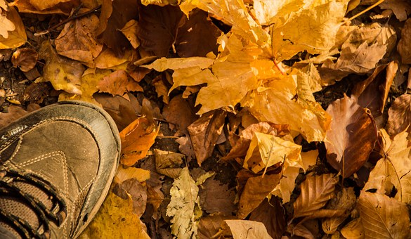 Autumn, Leaves, Forest, Fall, Autumn Leaves, Hiking