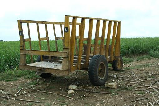 Dare, Stroller, Mature, Sugar Cane, Field, Cart