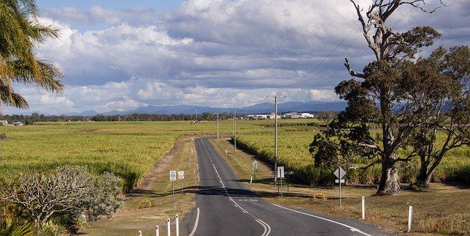 Landscape, Rural, Farming, Sugar Cane, Fields, Road
