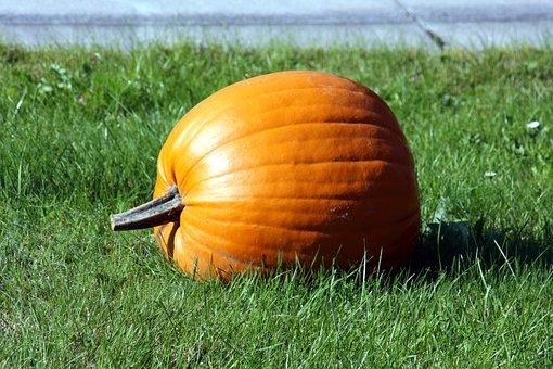 Pumpkin, Grass, Meadow, Green, Landscape, Nature