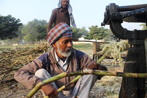 Sugar Cane, Man, Machine, Punjab, Jaggery
