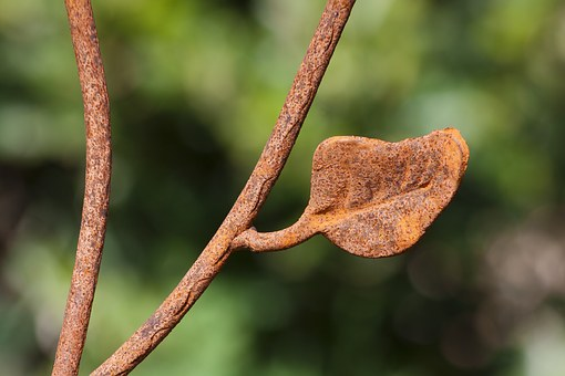 Leaf, Fence, Iron Fence, Detail, Wrought Iron, Forged