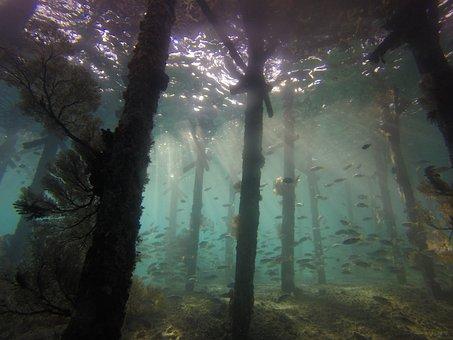 Underwater, Jetty, Scuba Diving, Seascape, Sunlight