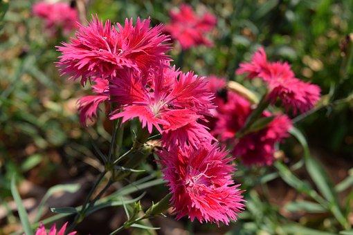 Flower Pom Pom Tank, Tassel Flower, Beautiful Flowers