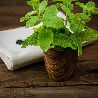 Herbs, Wood, Dish, Glass, Opbvevaring, Green, Dishtowel
