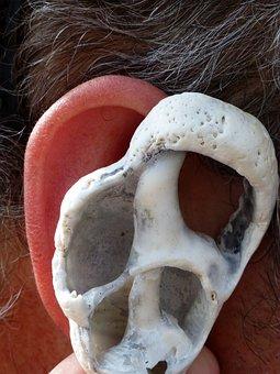 Ear, Shell, Ear Canal, Inner Ear, Balance, Archway