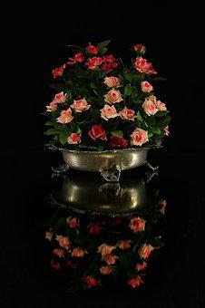 Flowers, Rosa, Petals, Nature, Petal, Rose, Beauty