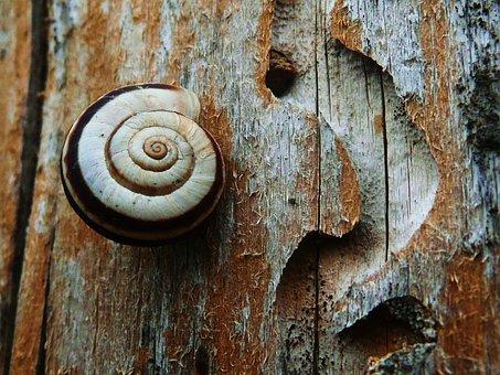 Snail, Nature, Wildlife, Mollusk, Woodland, Animal
