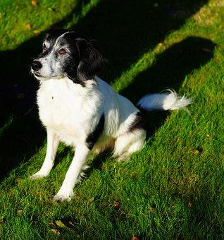 Dog, Male, Dear, Sit, Attention, Good, Pride, Fur