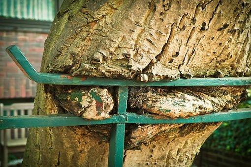 Tree, Fence, Nature, Wood, Bark, Garden Fence, Fenced