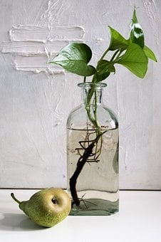 Composition, Pear, Bottle, Green, Light, Water, Pact