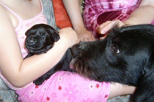 Puppy, Dog Mama, Dog, Bitch, Sweet, Protector, Hybrid