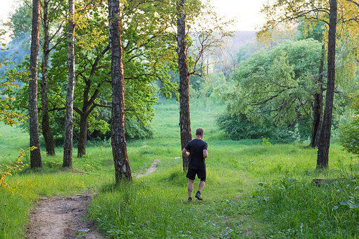 Running, Runner, Charging, Morning, Evening, Forest