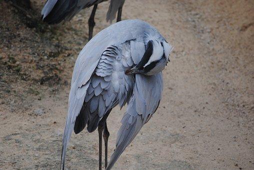 Bird, Stork, Preening, Wildlife, Nature, Beak, Animal