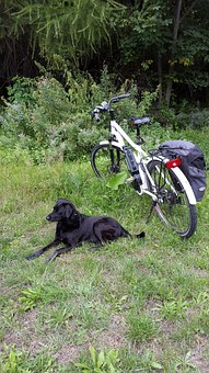 Tired, Electric Bicycle, Dog, Exit, Mountains, Green