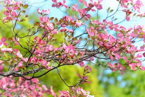 Landscape, Natural, Flowers, Arboretum, Plant, Japan
