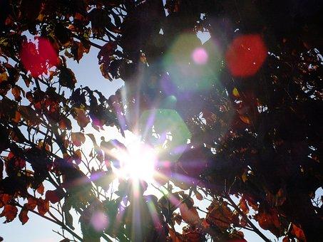 Autumn, Leaves, Dogwood, Season, Autumn Leaves, Tree