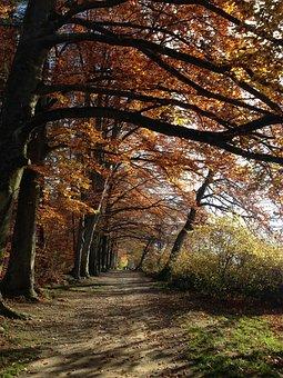 Forest, Nature, Away, Autumn, Trees, Zollikon, Zurich