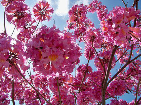 Pink, Dogwood, Tree, Spring, Flower, Floral, Bloom