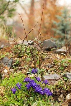 Iris, Spring, Physic Garden, Flora, Flowers, Flower