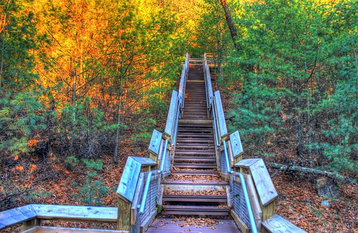 Staircase, Woods, Trees, Autumn, Forest, Wild, Woody