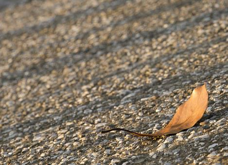 Defoliation, Light, Sunset, Shadow, Lonely Leaf, Autumn