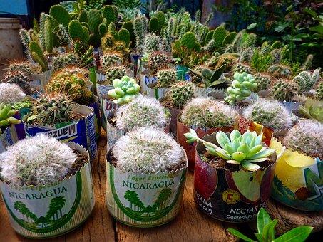 Cactus, Plant, Bobbin, Nicaragua