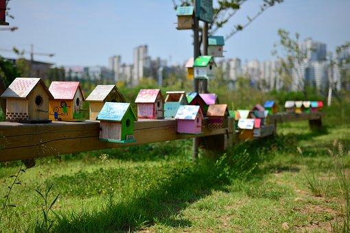 Bird Cage, New Foster Home, Blue Sky, Sky, House