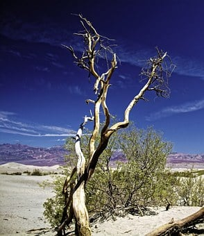 Death Valley, Outdoor, Tree, Plant, Desert, Nature