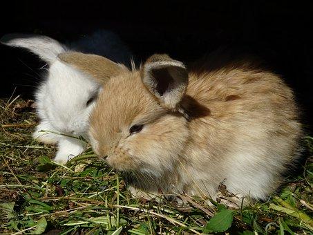 Rabbit, Bunny, Rabbits, Bunnies, Ušáček, Usace, White